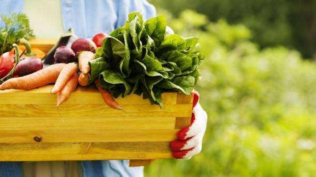 新西兰暴风雨肆虐,推动蔬菜价格上涨!苹果价格却下跌16%!