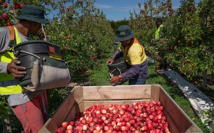 新西兰这类工签遭质疑,经济发展无法从中受益?